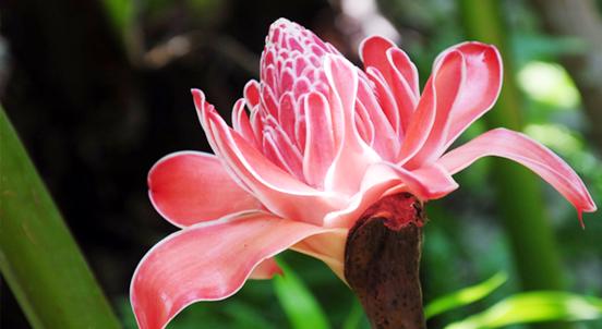 澳大利亚:植物的王国